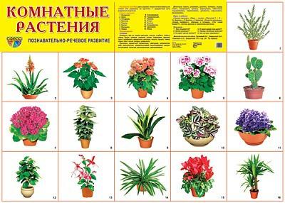 Комнатные цветы в картинках.
