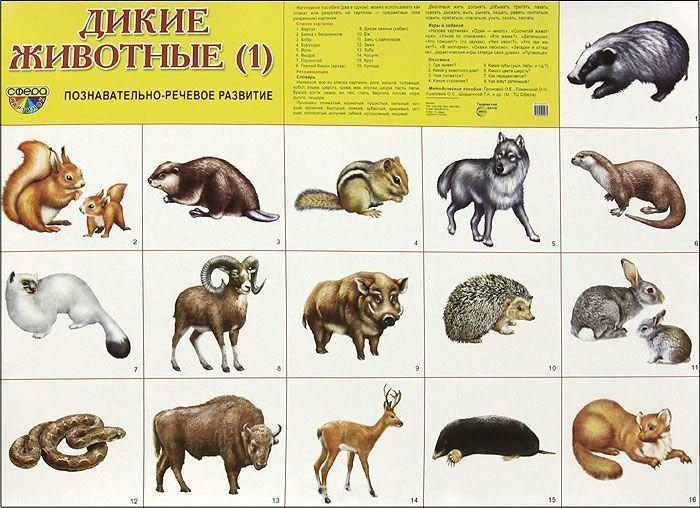 Картинки животных для детей до 2 лет