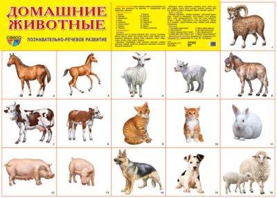 Домашние животные с детенышами в картинках