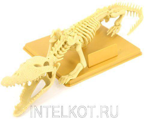 Скелет крокодила. Наглядное пособие по анатомии