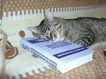 Кот спит на книге