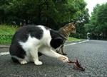 Прогулки Ученого Кота