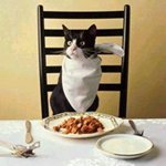 Ученый Кот кушает за столом