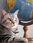 Кот с глобусом