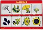Растения. Развивающая игрушка из серии