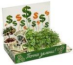 """Вырасти """"зелень""""! Набор для выращивания. Живая открытка"""